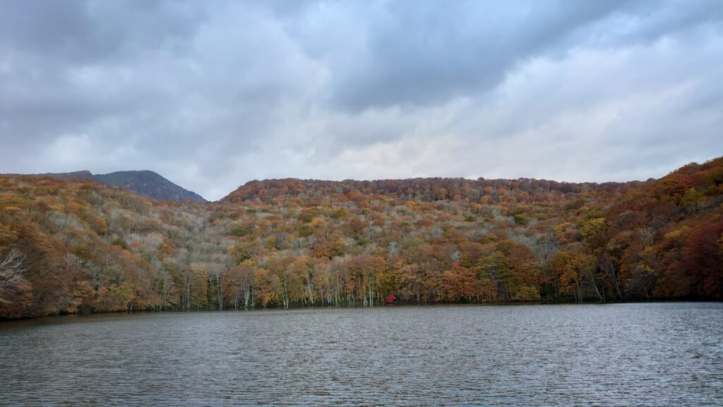 青森県十和田市の蔦沼