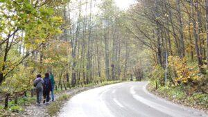 奥入瀬渓流内の道路